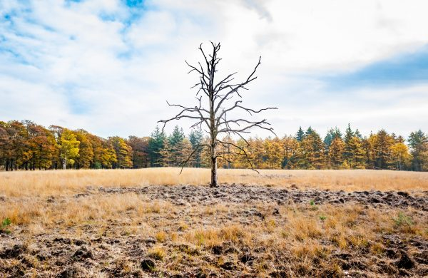 Lonely tree op de Veluwe