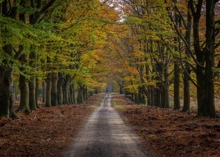 Bospad tijdens de herfst op de Hoge Veluwe