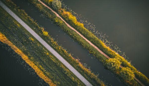 Lijnenspel in de natuur