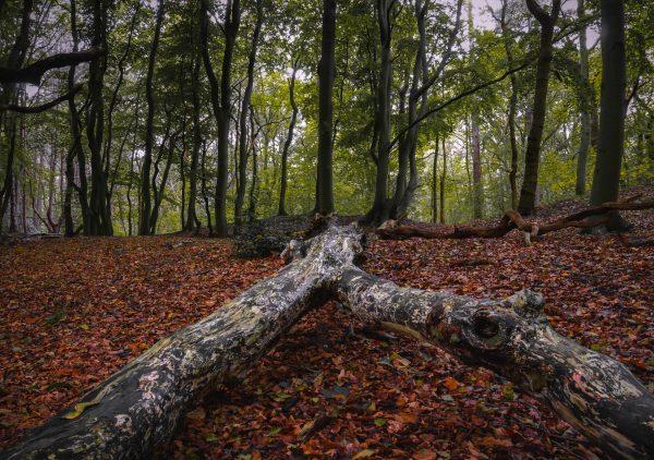 Lijnen naar het bos