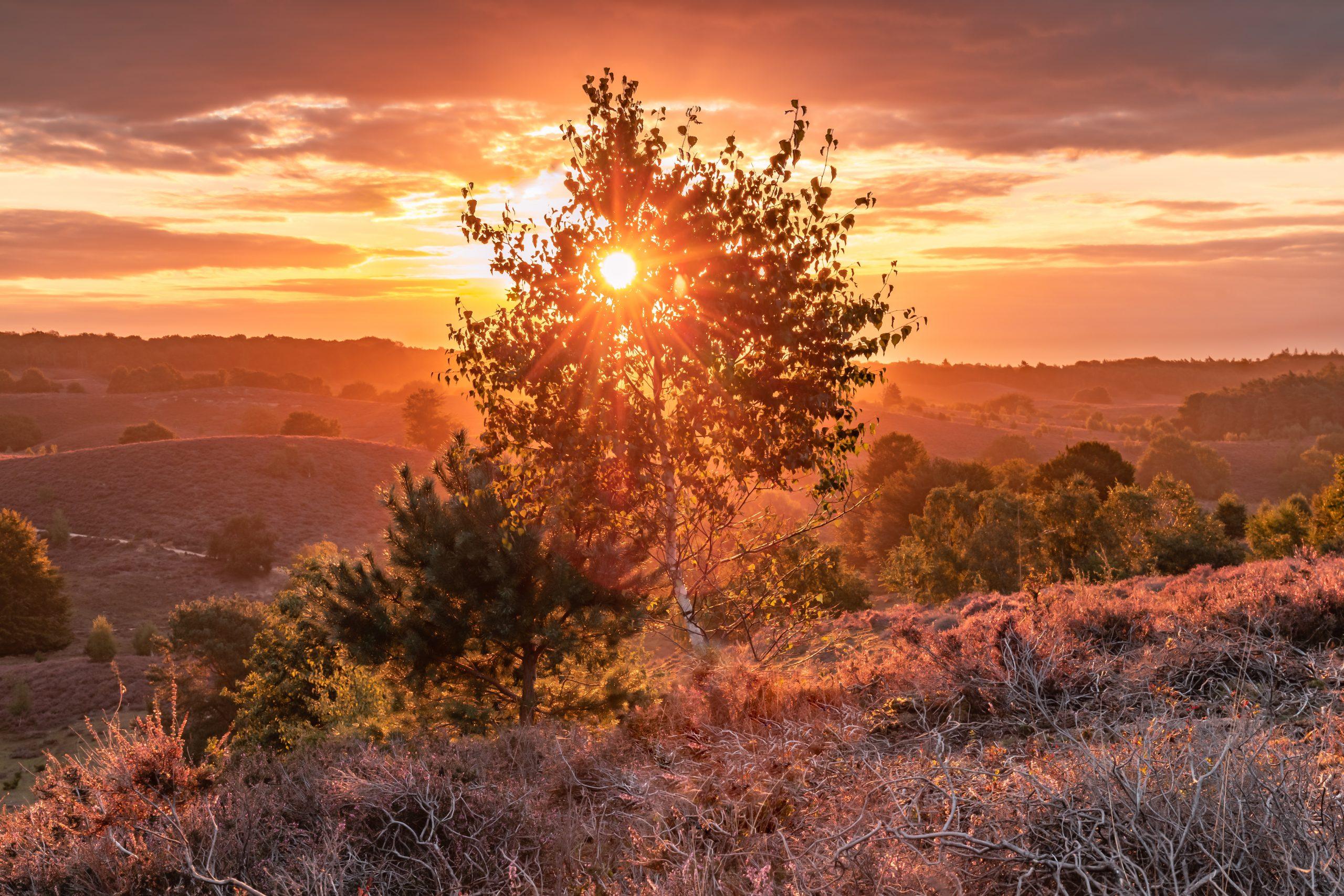 Het gouden uurtje door de boom op de Posbank