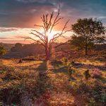 Zonsopkomst door de dode boom op de heide