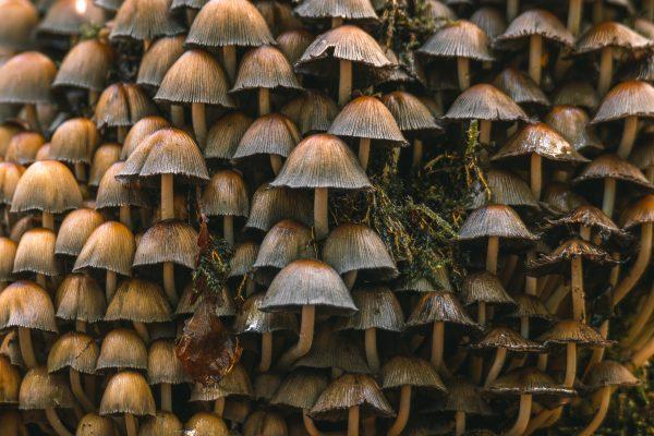 De paddenstoelen flat
