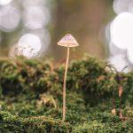 Een paddenstoel sprookje