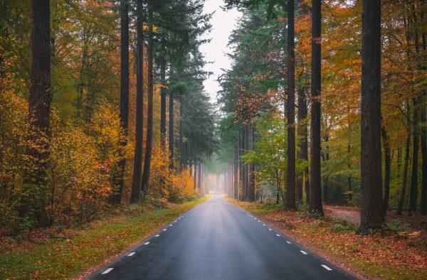 Sprielderweg, de bekende weg naar het Speulderbos