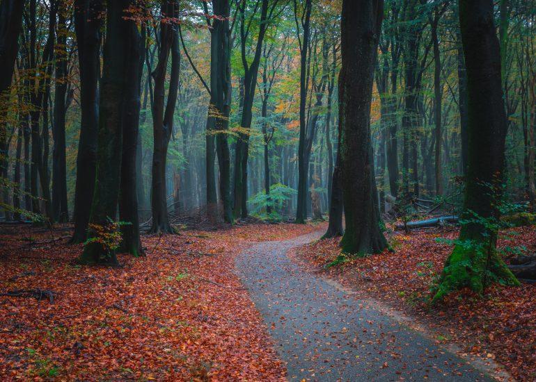 Het spooky en magische Speulderbos