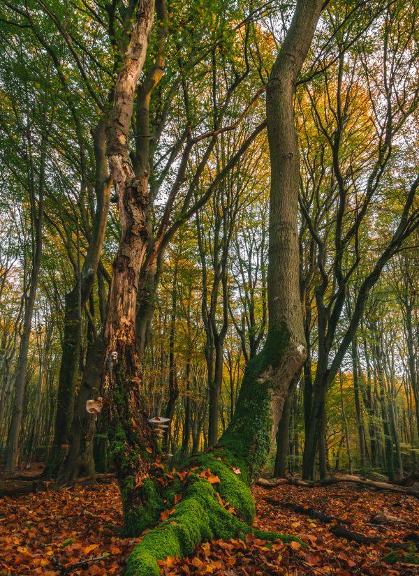 Bijzondere boom in het Speulderbos