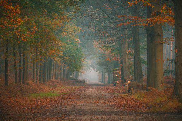 Mistige ochtend in het Mastbos in Breda
