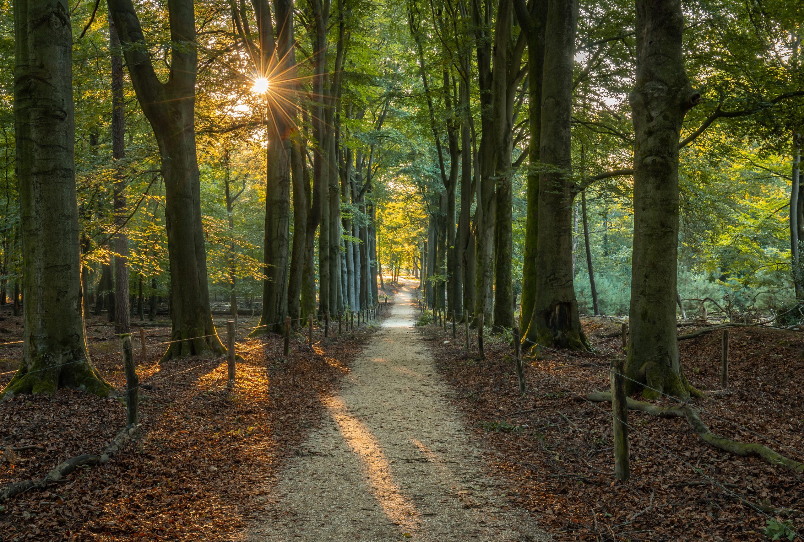 De zon schijnt door de bomen