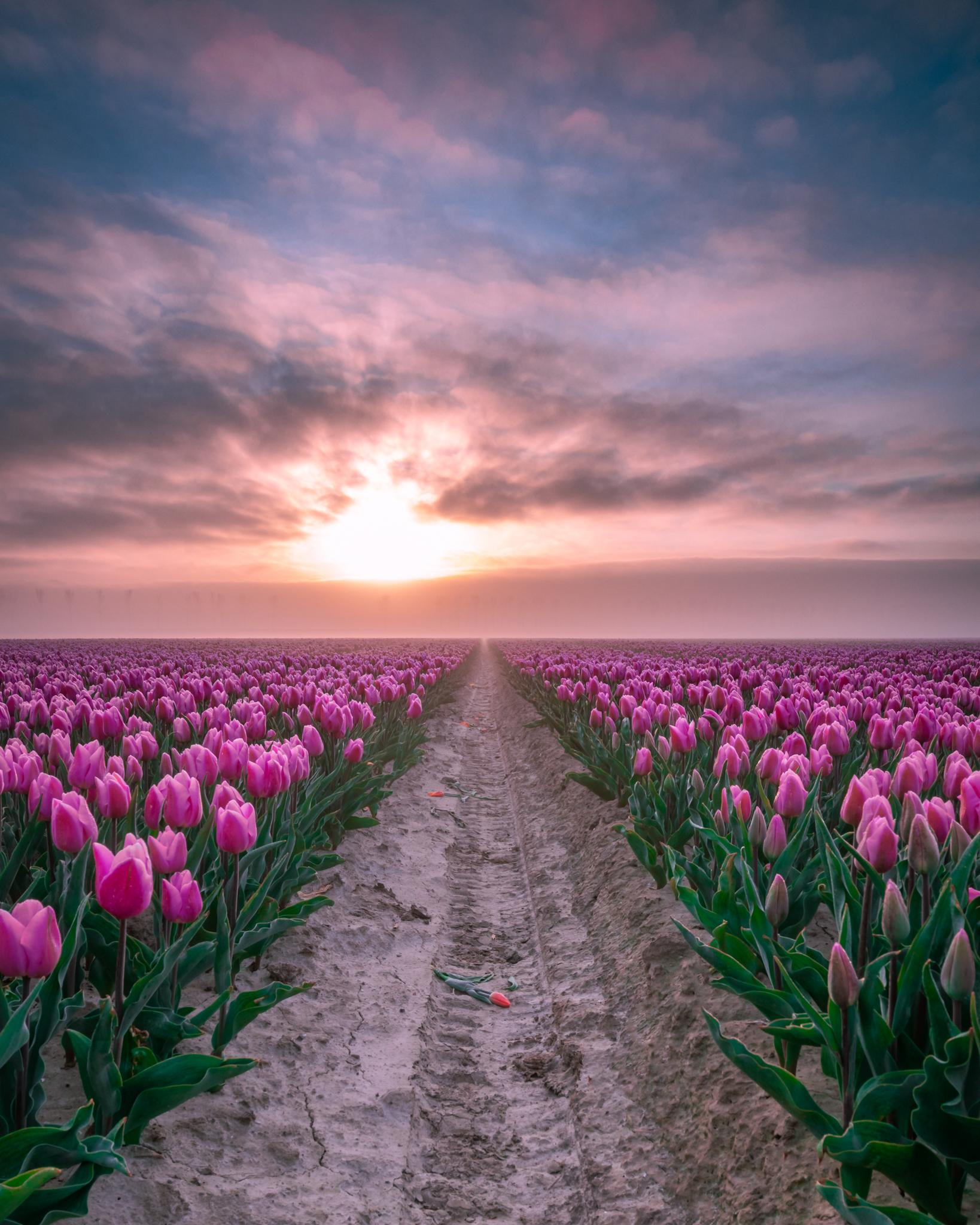 Spektakel tussen de tulpen