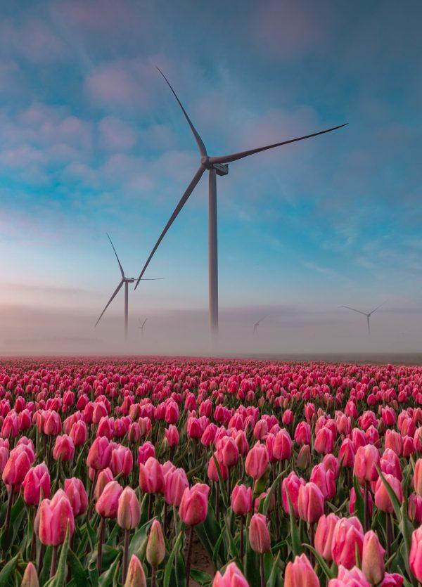 Windmolens en tulpen, lekker Hollands