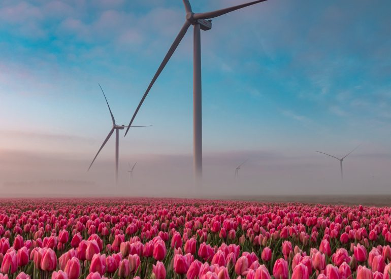Windmolens en tulpen, lekker Hollands